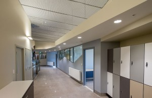 acoustic ceilings installed in WA